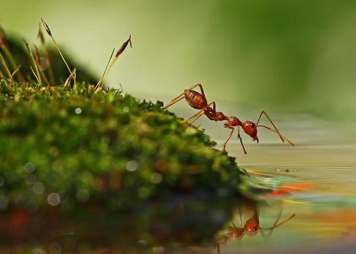 amazing-macro-photography-22