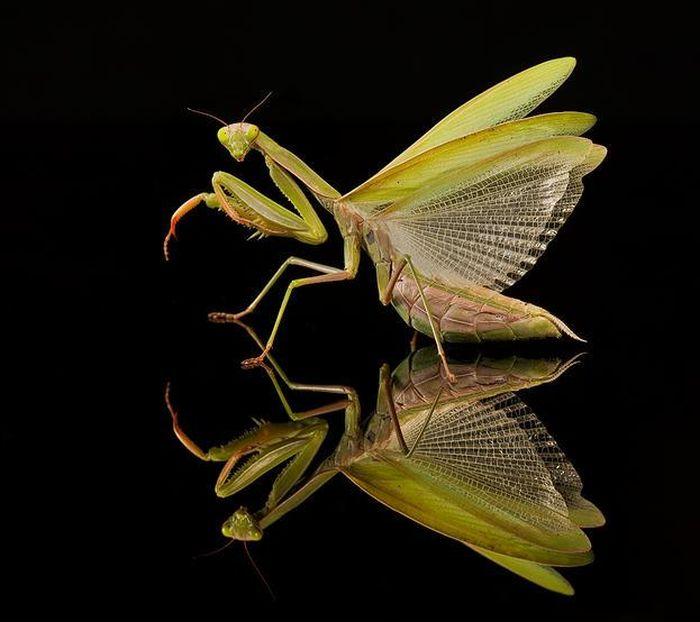amazing-macro-photography-25