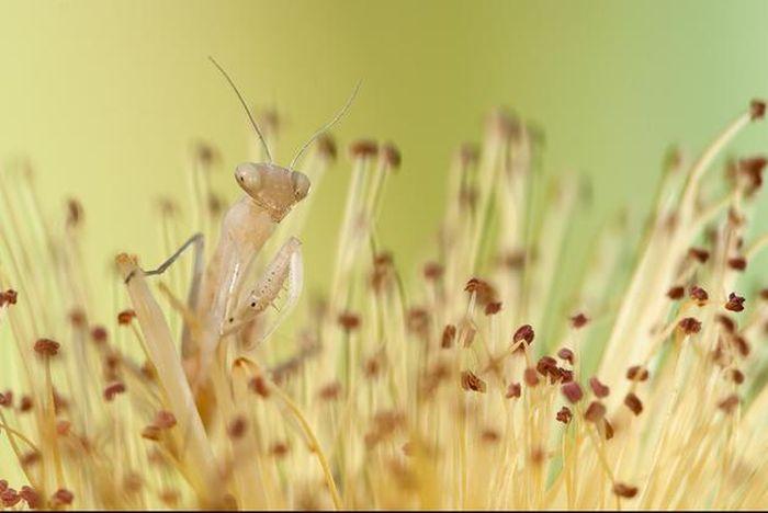 amazing-macro-photography-29