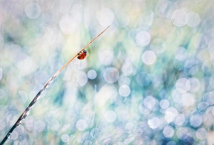 amazing-macro-photography-37