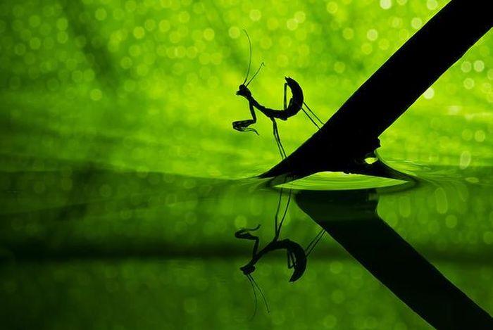 amazing-macro-photography-41
