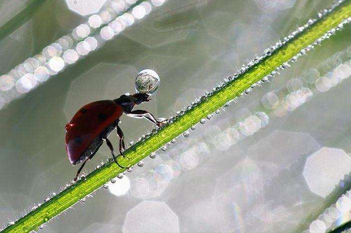 amazing-macro-photography-9