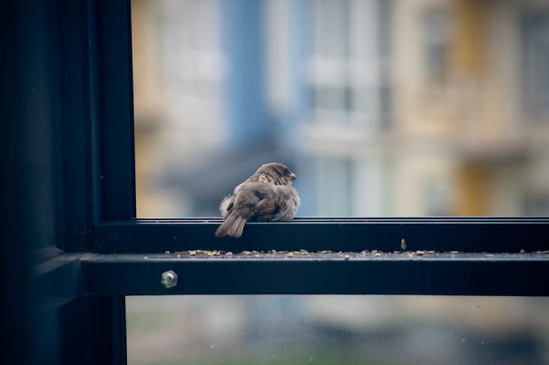 found-blind-baby-sparrow-below-my-balcony-9