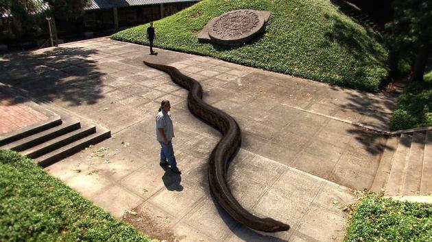 titanoboa prehistoric monster snake 6 pictures � memolition