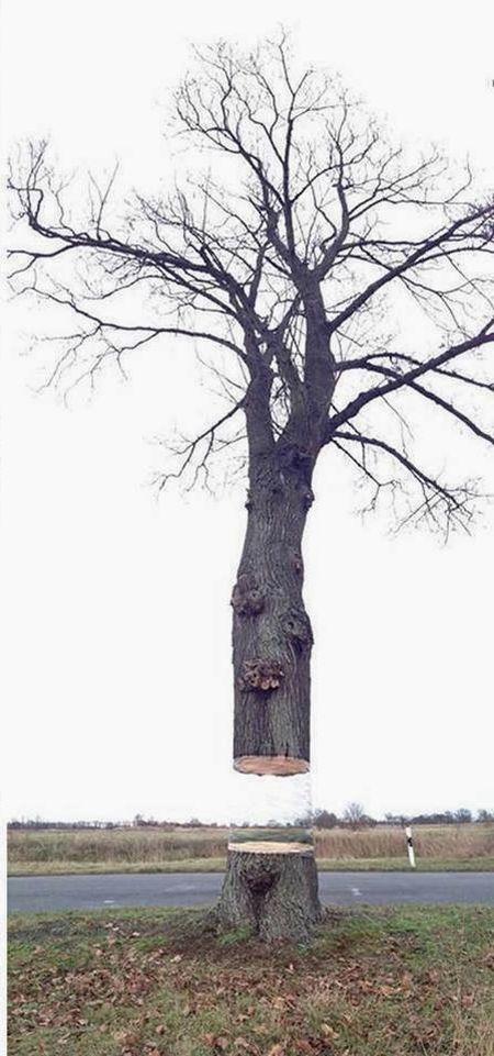 tree_prank_03