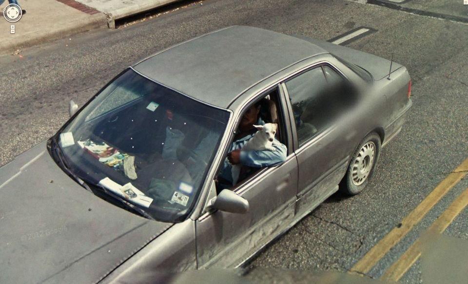 z15131949V,Kierowca-tego-auta-jest-dosc-nietypowy