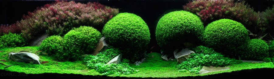 ... Freshwater Aquariums in the World (21 pictures) - Memolition