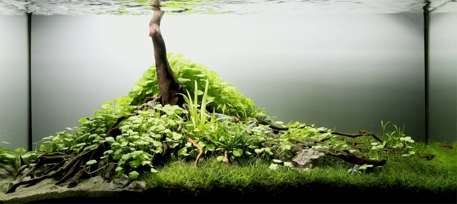 The Most Beautiful Freshwater Aquariums in the World (21 ...