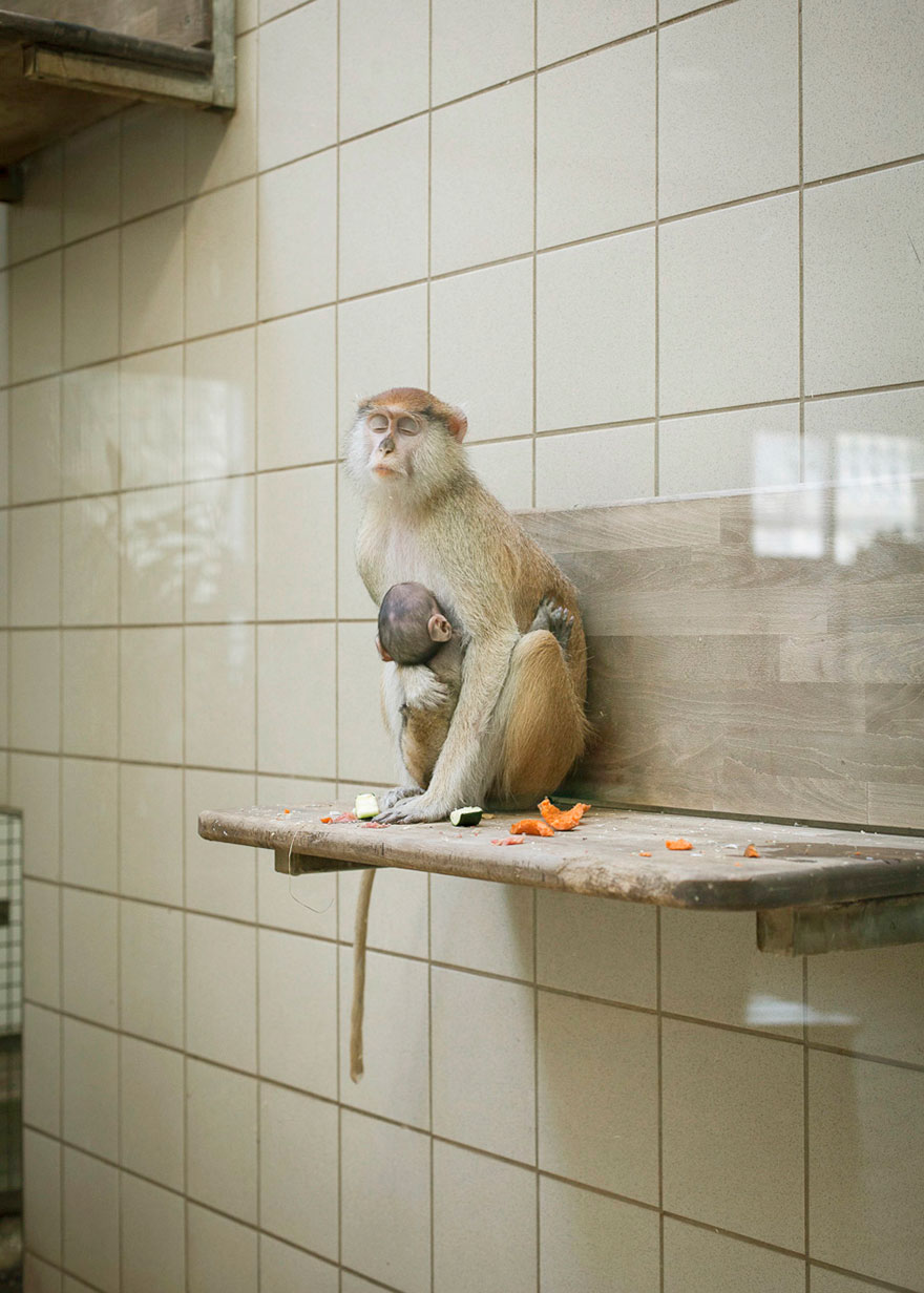 Lost-Behind-Bars-Photos-Zoo-Animals-Elias-Hassos-1