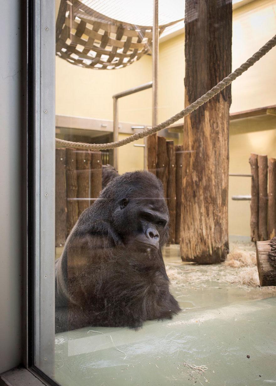 Lost-Behind-Bars-Photos-Zoo-Animals-Elias-Hassos-2