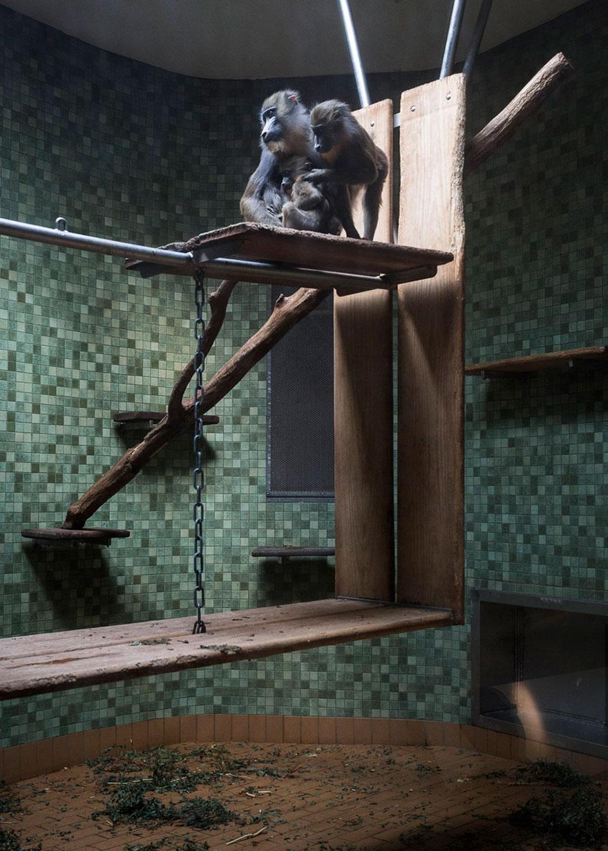 Lost-Behind-Bars-Photos-Zoo-Animals-Elias-Hassos-3