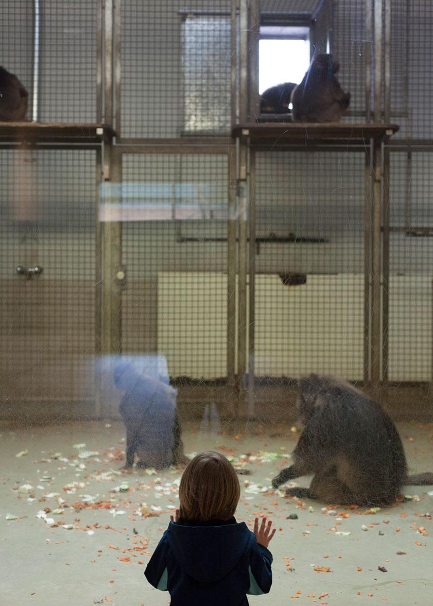 Lost-Behind-Bars-Photos-Zoo-Animals-Elias-Hassos-7