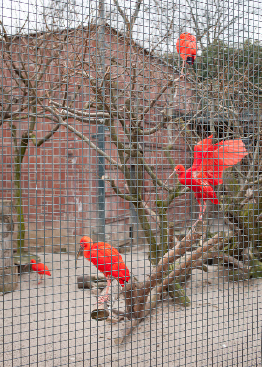 Lost-Behind-Bars-Photos-Zoo-Animals-Elias-Hassos-6