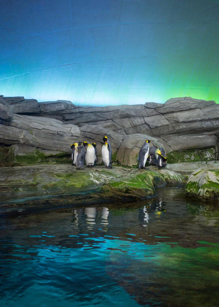 Lost-Behind-Bars-Photos-Zoo-Animals-Elias-Hassos-11