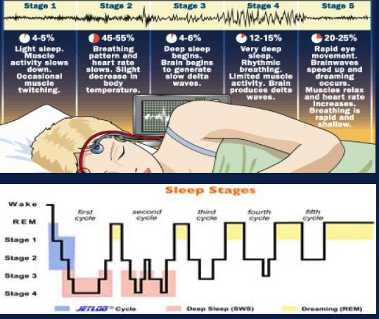 sleep-stages