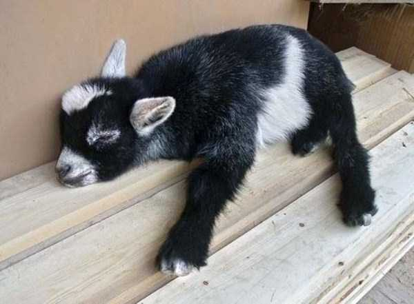 Exhausted But Still Cute Animals – Memolition  Exhausted But S...