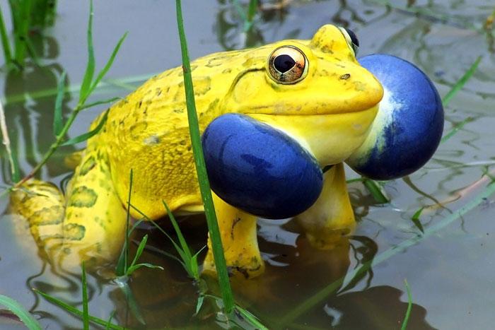 unusual-colored-animals-61__700