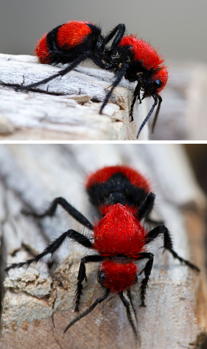 unusual-colored-animals-3__700