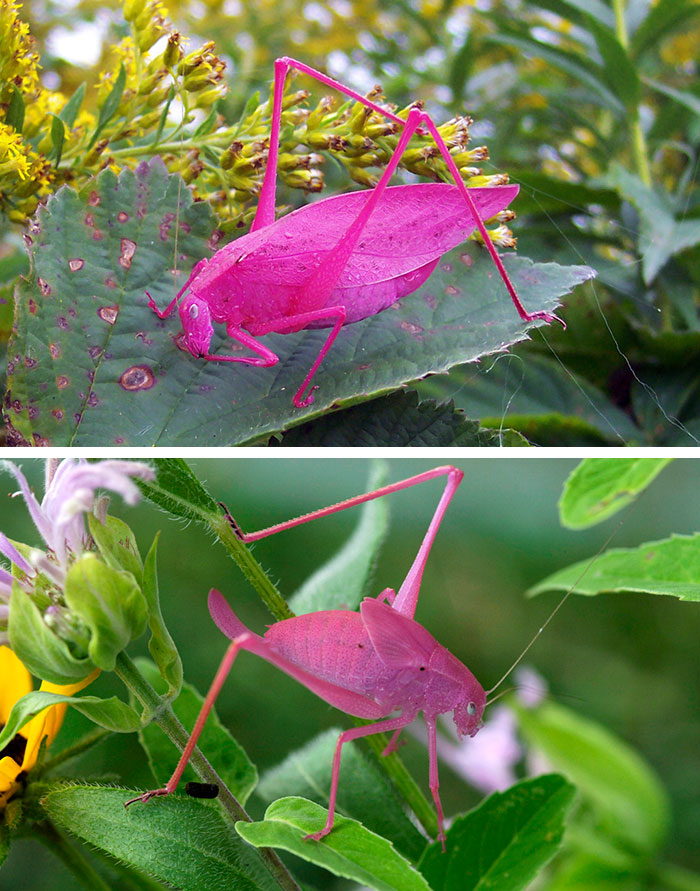 unusual-colored-animals-1__700