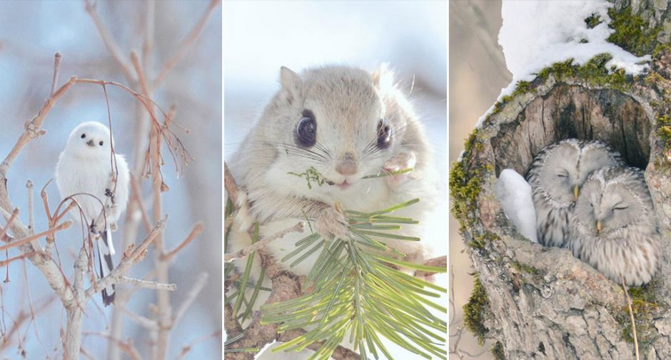 Adorable Animals Living Only On Hokkaido Island In Japan