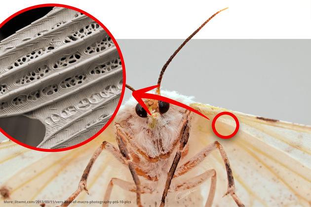 moth-wing-electron-microscope