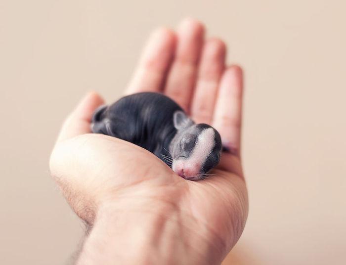 bunnies_growing_up_01