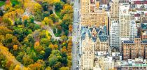 central-park-contrast-new-york-city-2__880