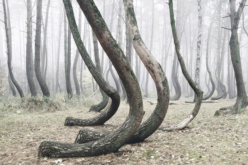 crooked-forest-in-poland-by-kilian-schoenberger-6