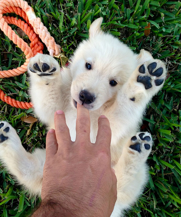 bear-dogs-37__605