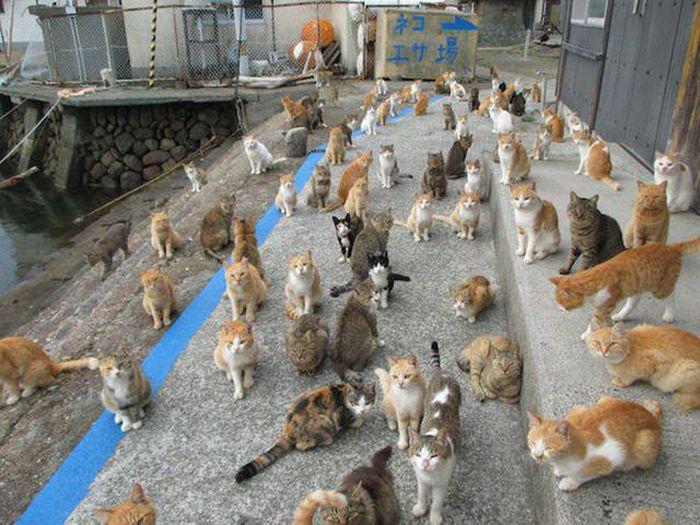 cat_food_01