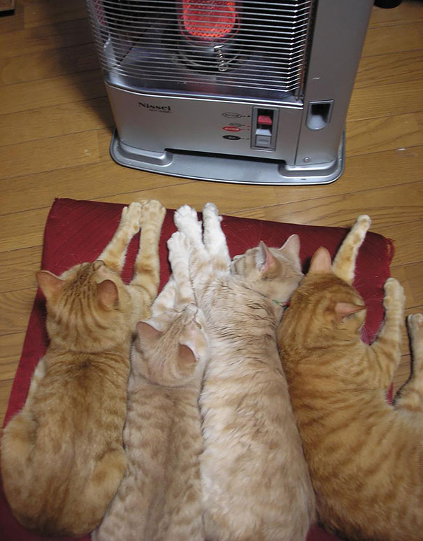 cats-enjoying-warmth-48__605