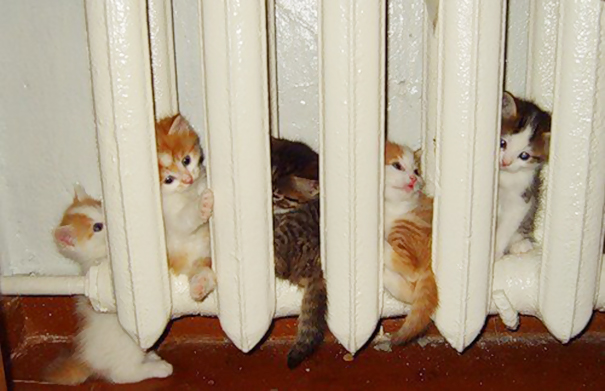 cats-enjoying-warmth-53__605