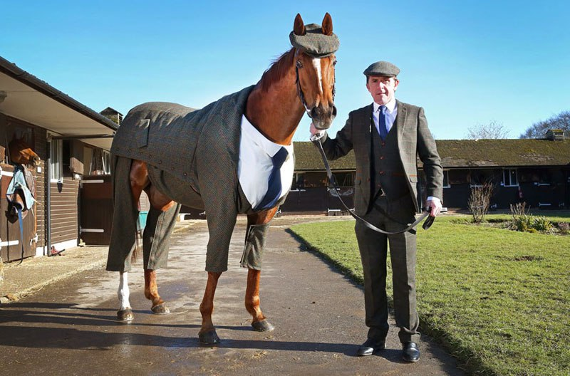 horse-in-a-tweed-suit-looking-absolutely-dapper-4