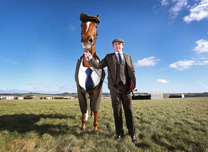 horse-in-a-tweed-suit-looking-absolutely-dapper-2