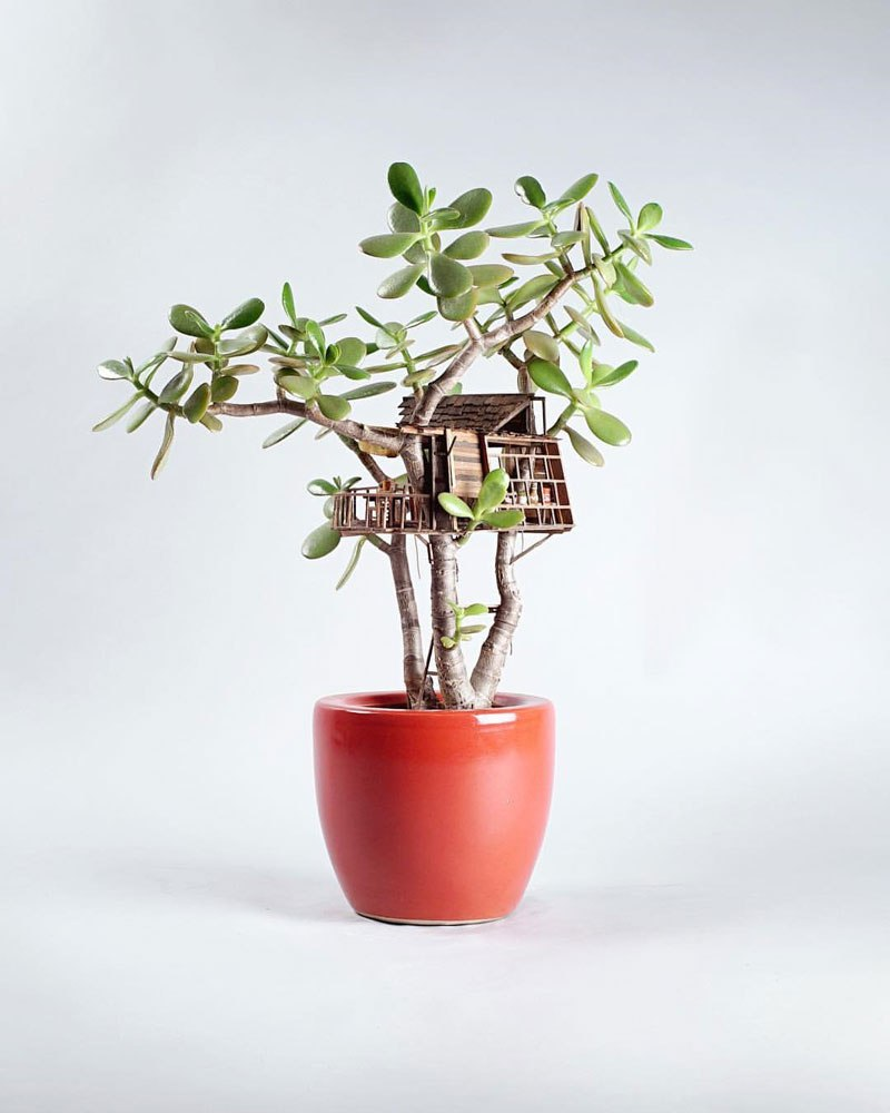treehouses-for-house-plants-by-jedediah-corwyn-voltz-6