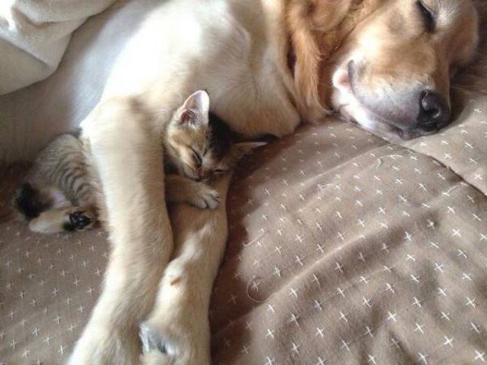 feel-good-pictures-that-will-put-a-smile-on-your-face-right-away-30