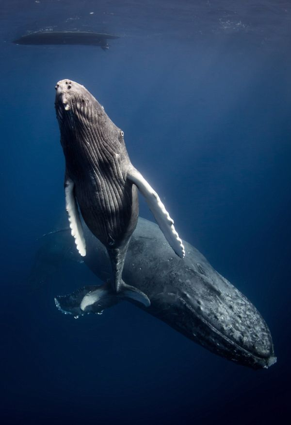 underwater-photography-that-will-take-your-breath-away-13