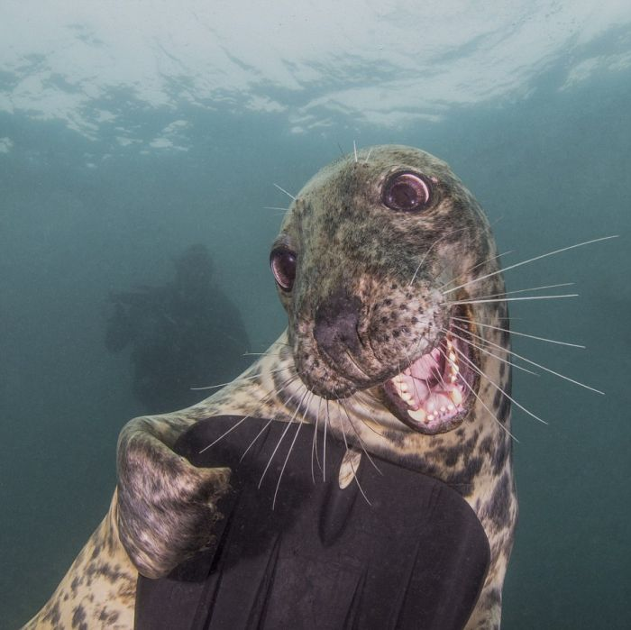 underwater-photography-that-will-take-your-breath-away-20