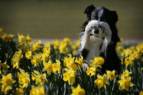 dog-yellow-flower