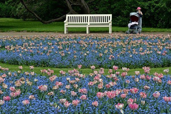 blue-stroller