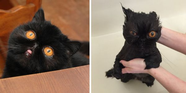 funny-wet-pets-before-after-bath-dogs-cats-68-572b548011e8c__700