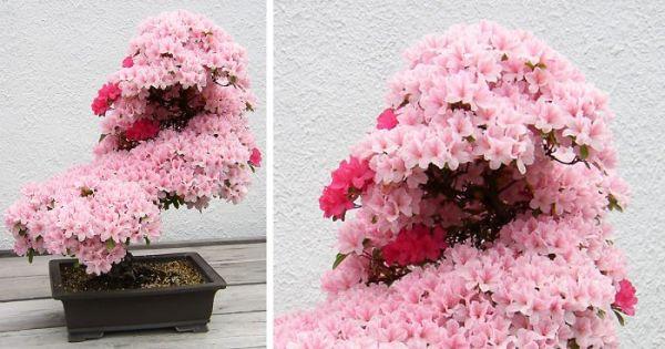 amazing-bonsai-trees-fb__700-png