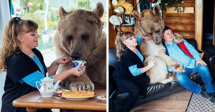 adopted-bear-russian-family-stepan-fb__700-png