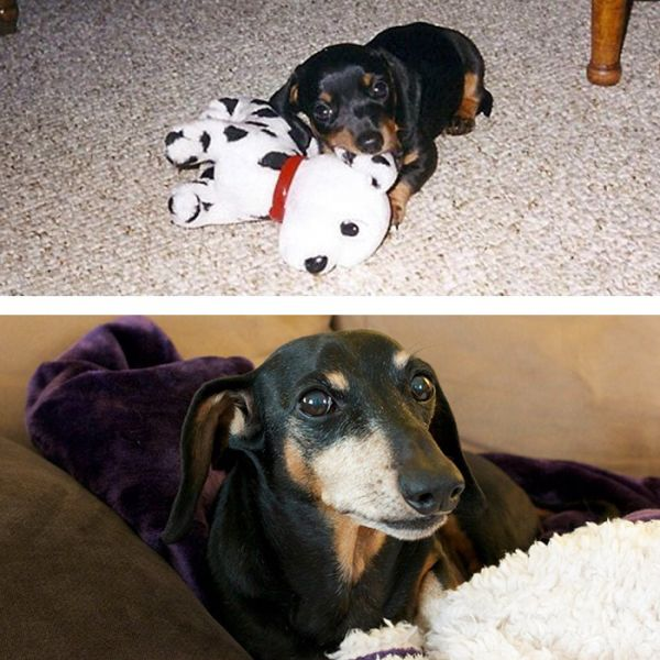 before-after-pets-growing-old-first-last-photos-34-577b9bb7b274e__700