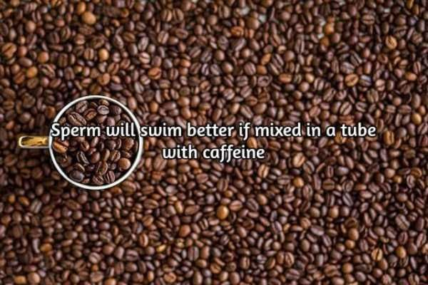 facts-about-coffee-13
