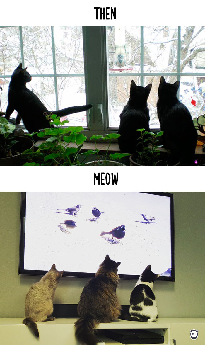 cats-then-now-funny-technology-change-life-11-571618ff6eaf1__700