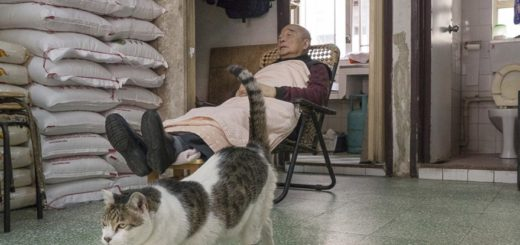 shop-cats-photography-marcel-heijnen-hong-kong-1-5809cd465b981__880