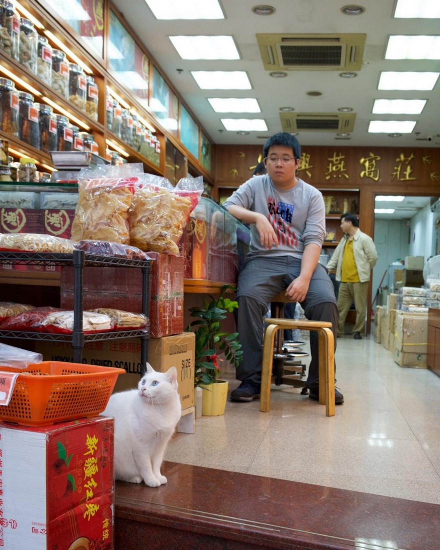shop-cats-photography-marcel-heijnen-hong-kong-24-5809cd8f3e622__880