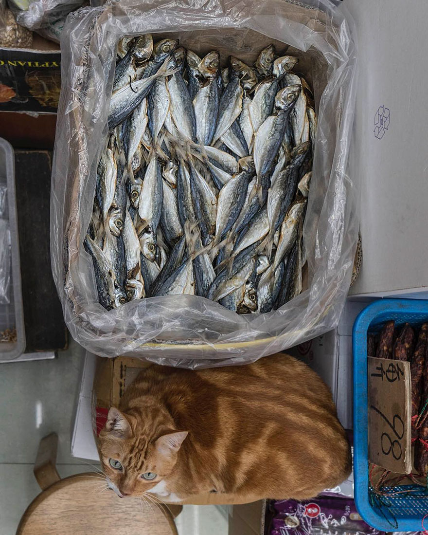 shop-cats-photography-marcel-heijnen-hong-kong-45-5809d39b0a0c5__880
